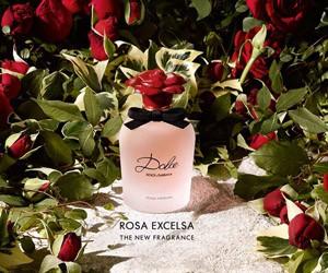 Новый аромат Dolce Rosa Excelsa